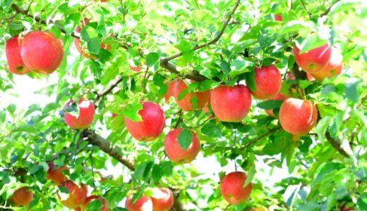 ふじりんごとサンふじの違いを徹底比較