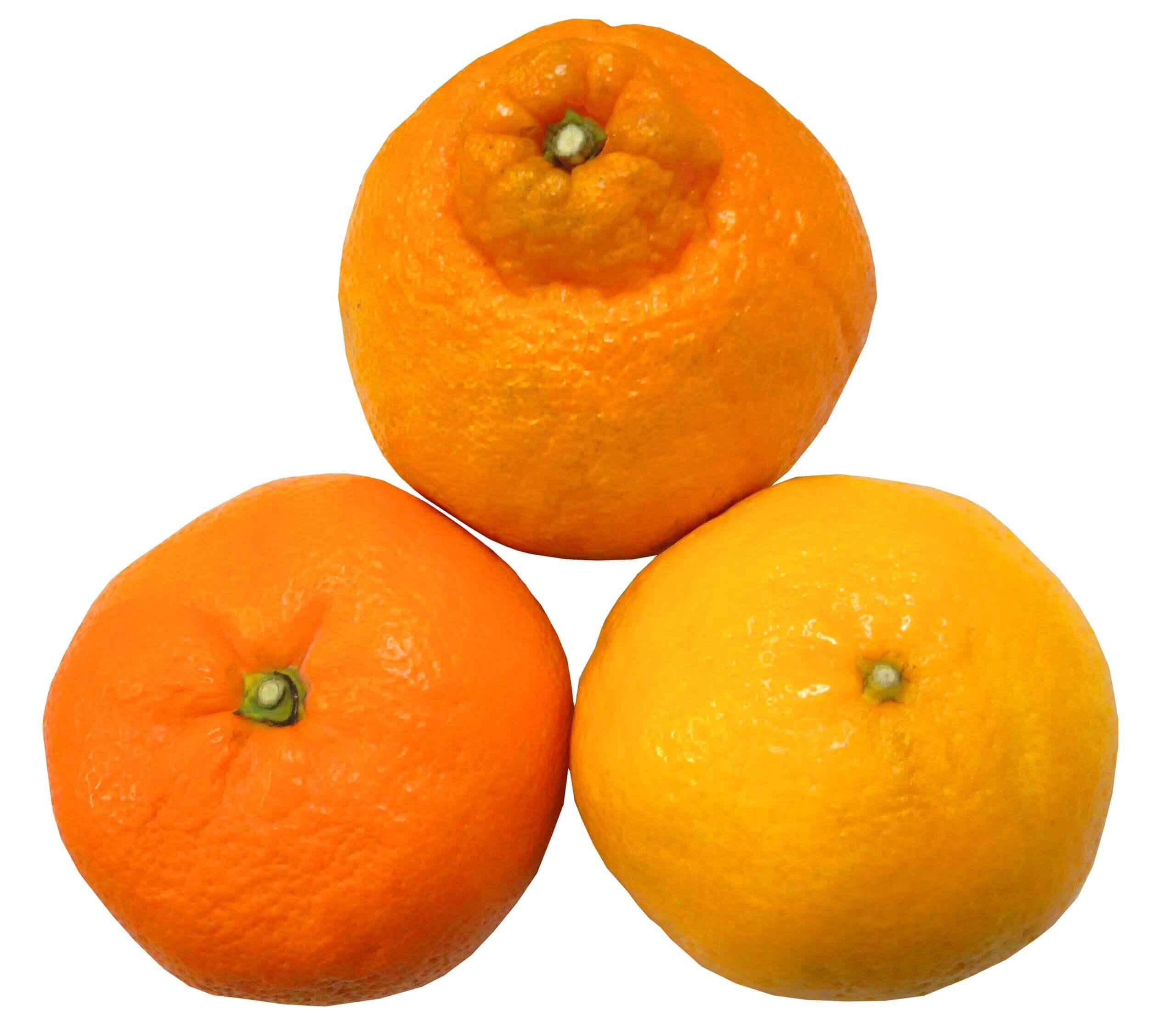 様々な柑橘類