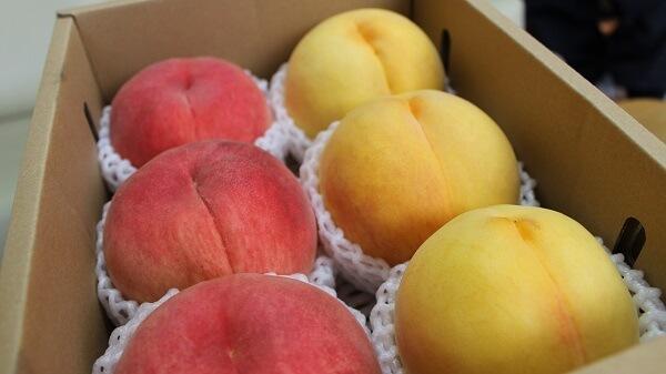 黄金桃と白桃