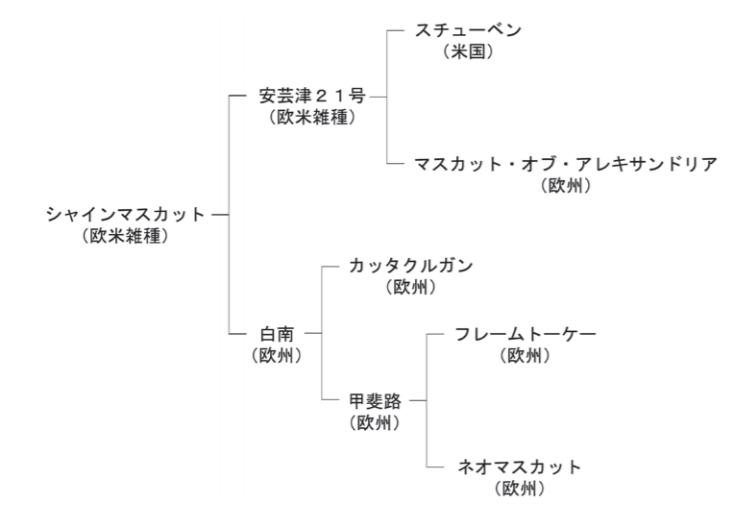 シャインマスカットの系譜図