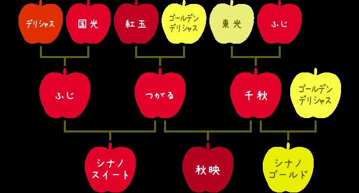 シナノスイート、秋映、シナノゴールドの系譜